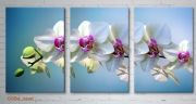 orchidea-or64-new1.jpg