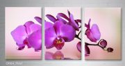 orchidea-or64-pink-1.jpg